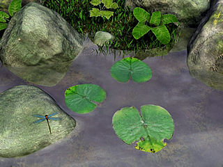 download Water Lily v3.02 Screensaver