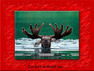 download Lost Without You For Lovers Screensaver