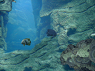 download 3D Rocky Reef Screensaver