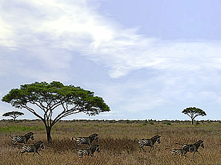 download 3D Serengeti Safari Screensaver
