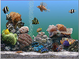 download Marine Aquarium v2.0 Screensaver