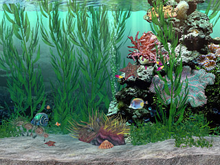 download Marine Tank 3D Screensaver