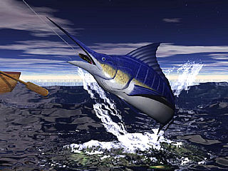 download Marlin Fishing v1.0 Screensaver