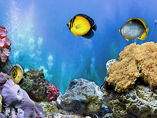 download Amazing 3D Aquarium Add-on Chaetodont II Screensaver