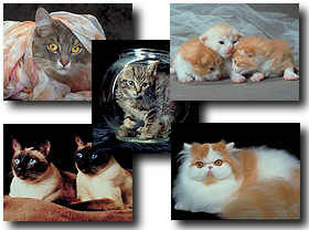 download Cats and Kittens Screensaver