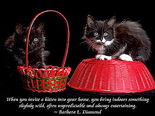 download Cats And Quotes Scenic Reflections Screensaver