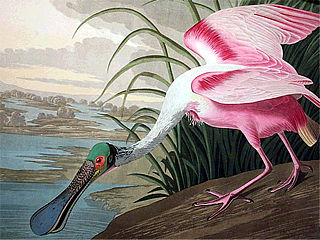 download Audubon Close Up Big Birds Screensaver