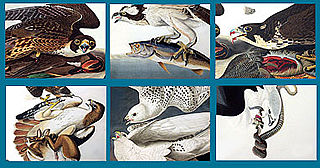 download Audubon Close Up Birds of Prey Screensaver