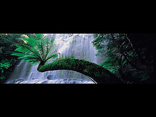 download LivingWaters-Russell Falls v1.2 Screensaver