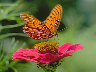 download Butterflies Living Color Screensaver