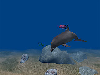 Dolphin Aqua Life Screensaver (free version) download for PC