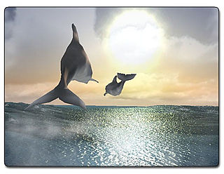 download Dolphins 3D Screensaver