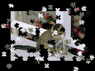 download Pet Puzzle Screensaver