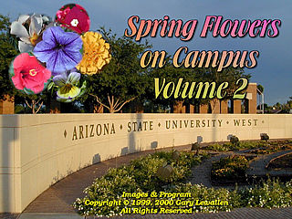 download Spring Flowers On Campus v2 Screensaver